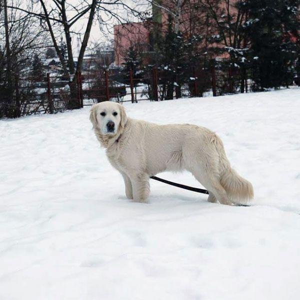 dogoterapia nasze psy olimpia